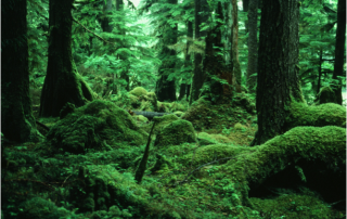 Mossy Forest