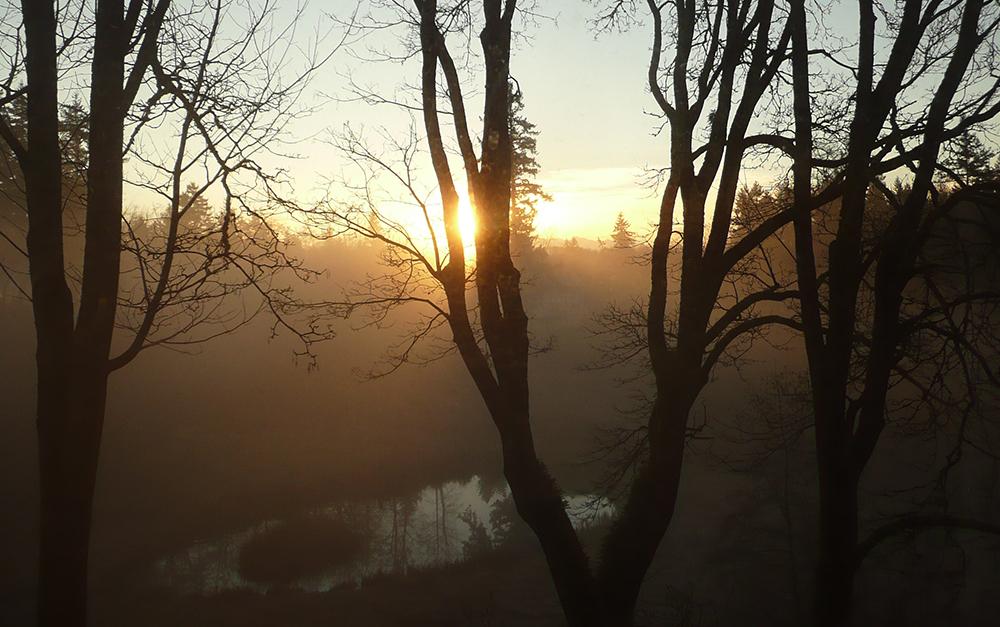 Sun Rise Through Trees