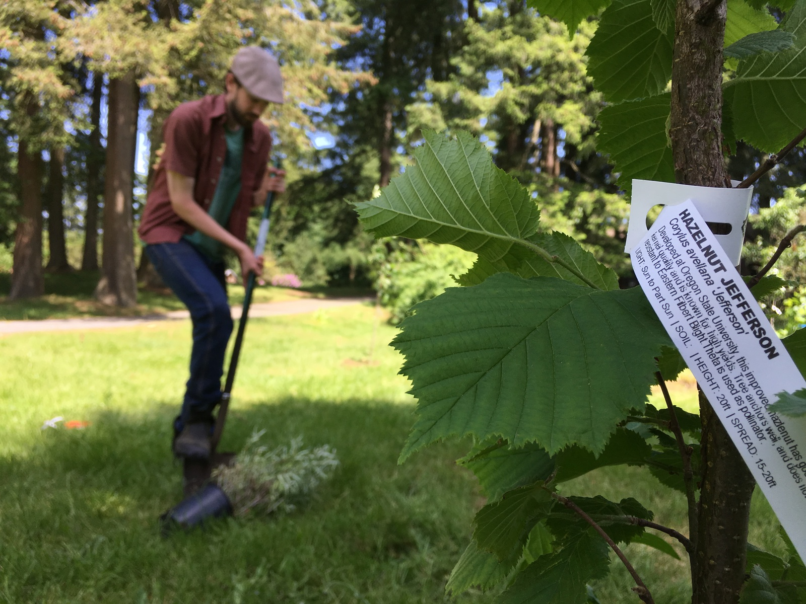 Tim Friesen Plants a Tree in the Orchard