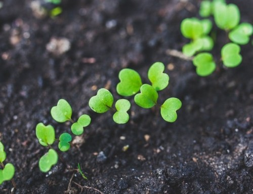 Why choose to grow food with Organic seeds?