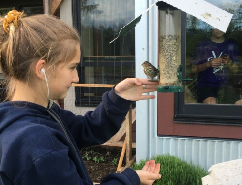 Confessions of an Aspiring Birder