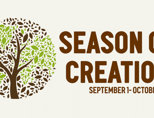 5 Books to Inspire You This Season of Creation