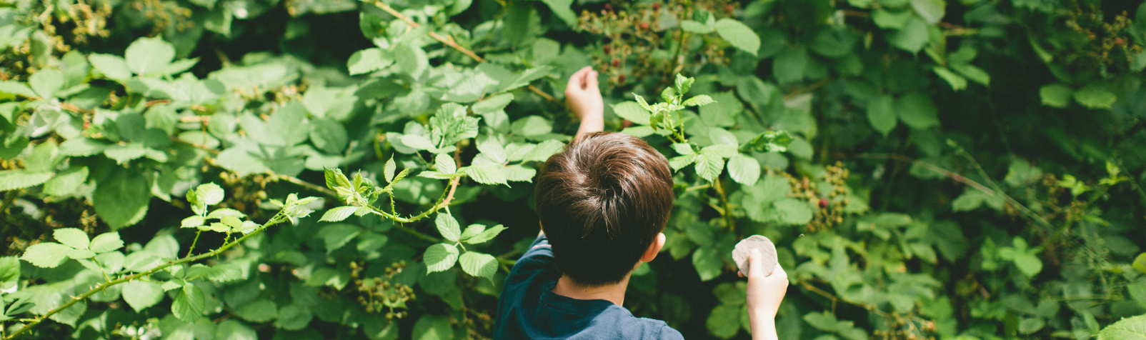 Boy picking leaves from a bush