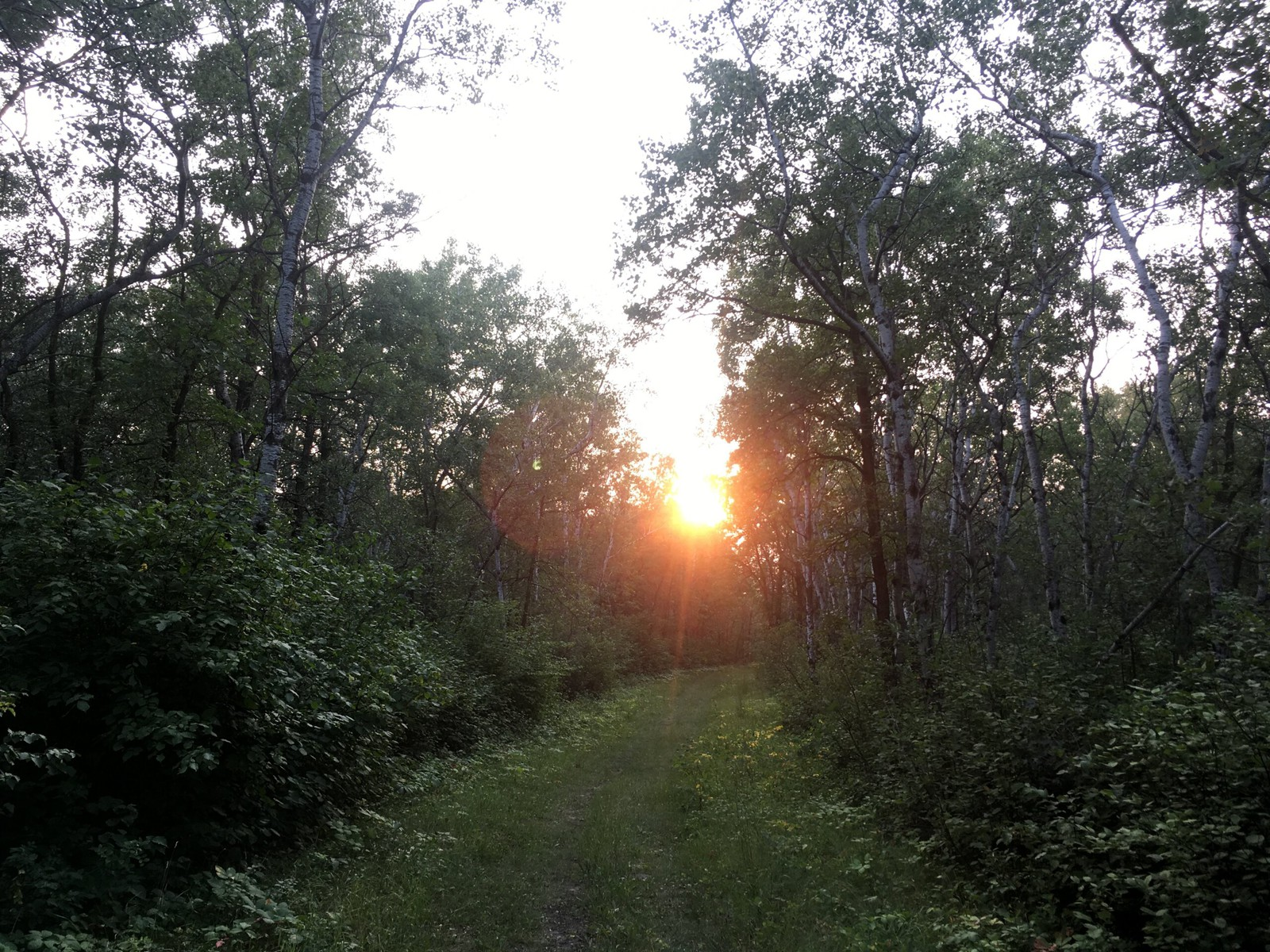 A trail in the forests, with sun beaking through the trees.