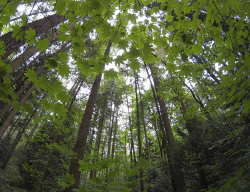 Thinking Theologically About Trees